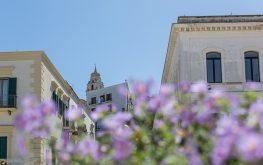 In Centro a vieste - vista cattedrale